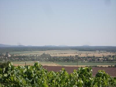 Tinto 2000 Rioja Hiszpania Tempranillo Cena 56 Alk Ocena